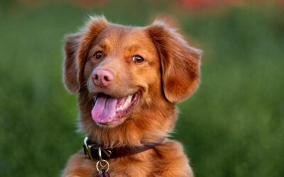 Gode grunde til at tage sit kæledyr med til tjek ved et dyrehospital